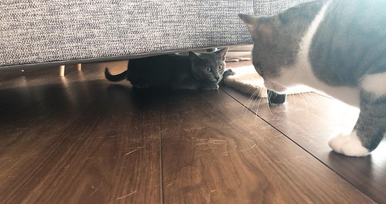 ソファーの下へ逃げ込む子猫
