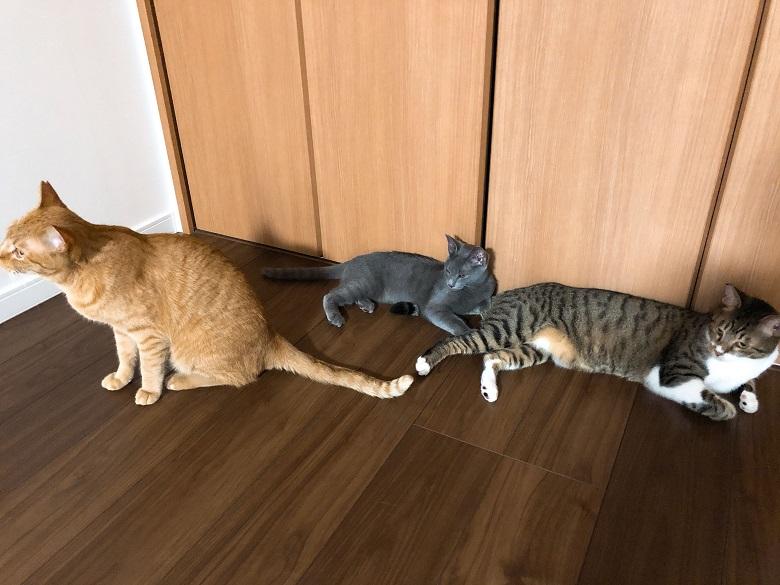先住猫との3ショット