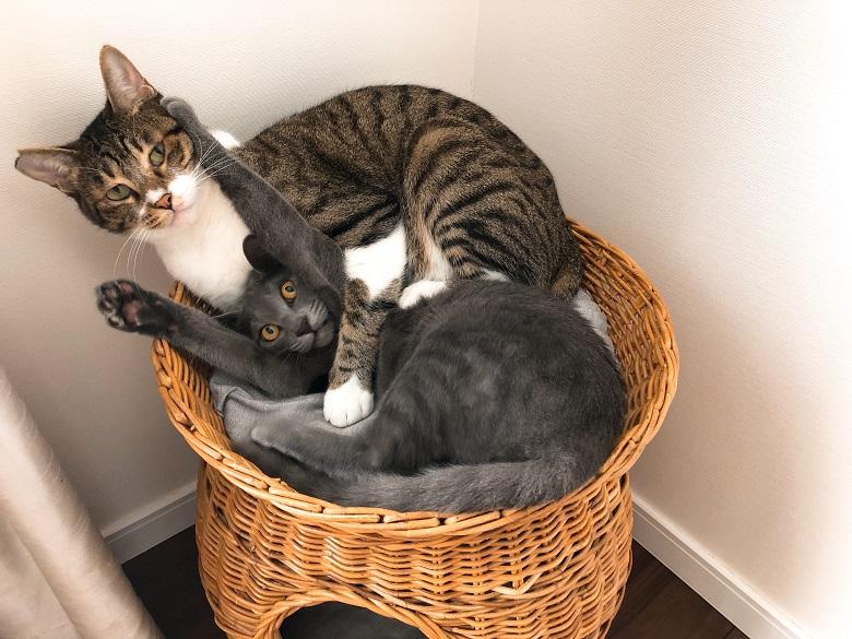 先住猫と子猫の2ショット