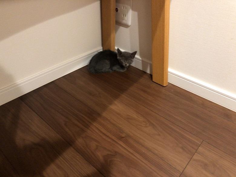 部屋の隅で震える子猫