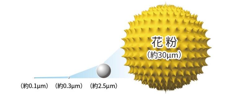 花粉サイズ