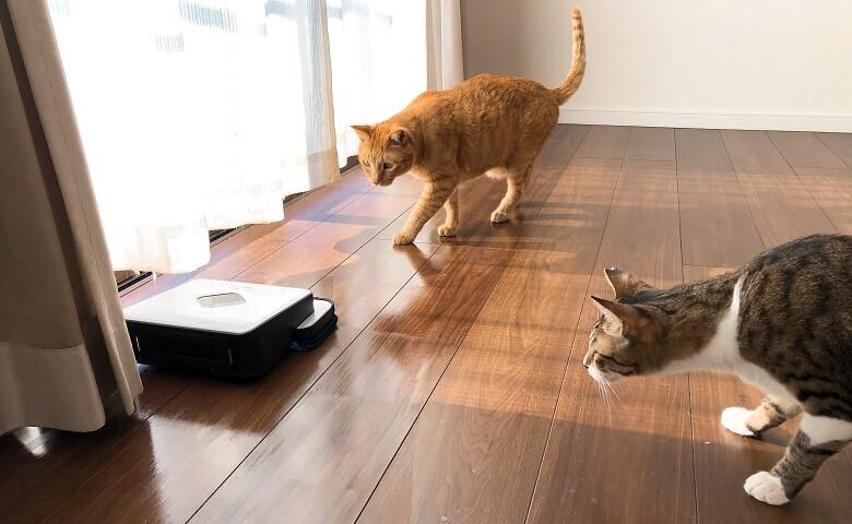 ブラーバと猫